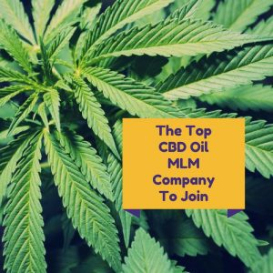 Top CBD MLM Company to join