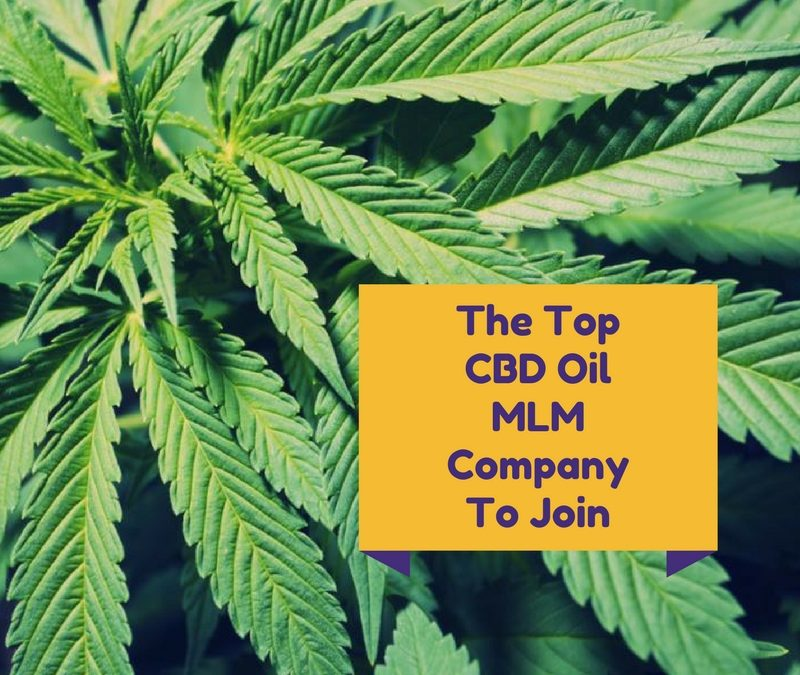 The Top CBD Oil MLM Company To Join